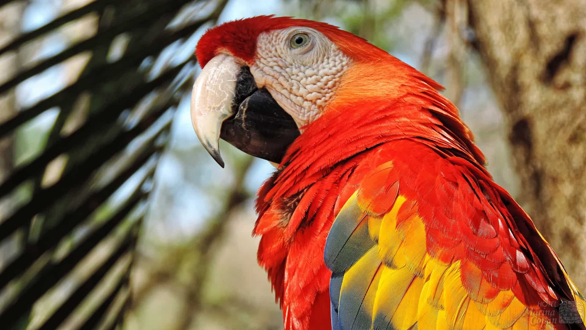 Macaw Mountain Bird Park & Reserve